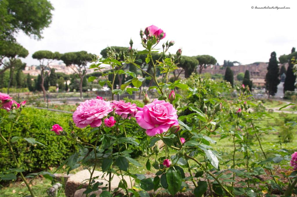 Il Roseto di Roma - maggio 2014