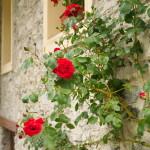 Lou Pitavin - I fiori
